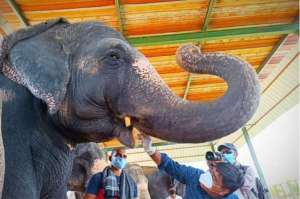 rajasthan-begins-testing-its-elephants-for-covid19_g2d
