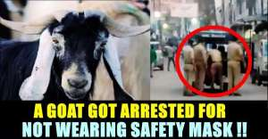 bizarre-kanpur-goat-arrest-for-not-wearing-mask_g2d