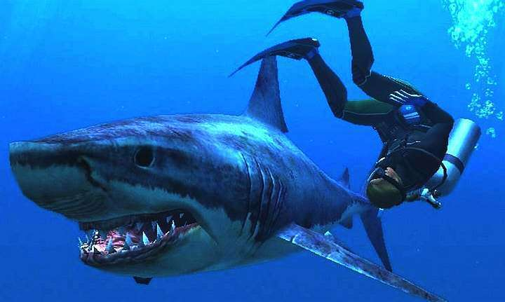 thor-to-be-seen-diving-with-deadly-sharks_g2d